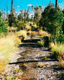 Old Hawaii Road. An old abandoned highway on the Big Island of Stock Image