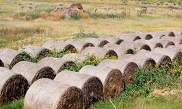 Old hay bales overgrown with flowers and weeds. Royalty Free Stock Images