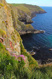 Old head of Kinsale covered by flowers Stock Image