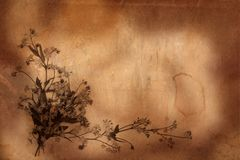 Old herbarium background Stock Photo