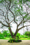 Old high tree at nature park Royalty Free Stock Photography