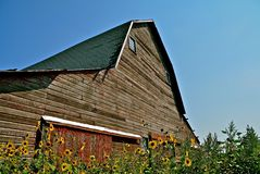 Old Hip Roof Barn. A deteriorating hip roof barn is surrounded by weeds and wild sunflowers Stock Photography