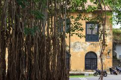 Old Historic building - Fort Galle - Sri Lanka. Old historic building partly obscured by vines hanging from a tree. It is part of the Dutch ware house which royalty free stock images
