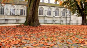 Old Historic Buildings With Colorful Autumn Falling Leaves. Season change during summer and autumn colorful of falling leaves with historic building in Konstanz stock photography