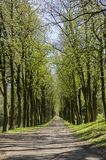 Old historic chestnut alley in Chotebor during spring season, trees in two rows, romantic scene. Way through old historic chestnut alley in Chotebor during Stock Photography
