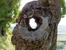 Old hole in the tree. Ancient forum with leafy tree contours and landscape background Stock Images
