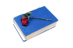 Old holy book with rose Stock Photo