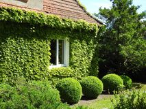 Old home and beautiful plants, Lithuania Stock Photos