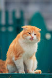 Old homeless man wounded ginger cat sitting outside. In the spring Stock Images