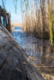 An old homemade boat in front of the river entrance, overgrown with reeds.  Royalty Free Stock Photos