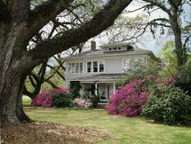 The Old Homestead. Ancient live oaks surround turn of the century National Register home in springtime Royalty Free Stock Photo