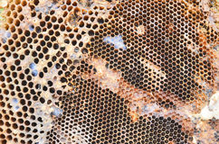 Old honeycomb. Old brown farber honeycomb closeup Royalty Free Stock Photography