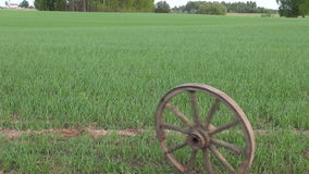 Old horse carriage wheel roll on spring crop farm field stock video
