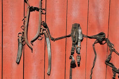 Old horse gear against a grunge board Royalty Free Stock Photos