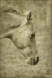 Old horse paper background Stock Photography