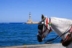 Old horse on port of Chania, Greece stock photography