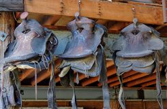 Old horse saddles hanging in a barn in a row. In Arizona USA stock photo