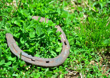 Old Horseshoe clover Royalty Free Stock Photography