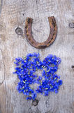 Old horseshoe and fresh cornflower blossoms on old wooden background Royalty Free Stock Photo