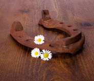 Old horseshoe with three camomile at wooden background Royalty Free Stock Images