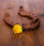 Old horseshoe with three camomile at wooden background Stock Images