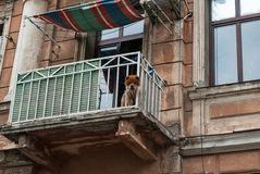 Old house balcony. A dog in an old house balcony stock photos