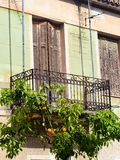 Old House Balcony With Orange Tree. An old pale green stucco house with brown wooden shutters, and an orange tree growing under an iron lace balcony Stock Photography