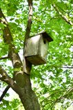 Old house for birds on a tree. Old bird house on tree and green leaves Stock Image