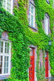 Old house covered by green ivy Stock Photography