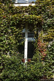 Old house covered by ivy in Montmartre. Royalty Free Stock Images