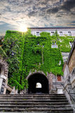 Old house covered by ivy in Rome against sunset, Italy Stock Photo