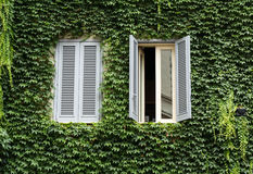 Old house covered by ivy in Rome Royalty Free Stock Image