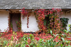 Old house covered with plant Royalty Free Stock Photography