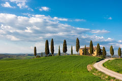Old house and cypresses Royalty Free Stock Image