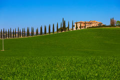 Old house and cypresses Royalty Free Stock Images
