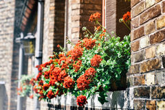 Old house decorated with red geranium Royalty Free Stock Photo