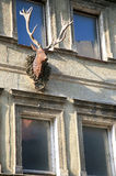 Old house facade with deer head and horns Stock Photography