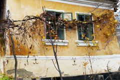 Old house facade with windows and vine. Old house windows with some branches with dry leaves and grapes stock image