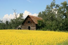 Old House in Field Stock Image