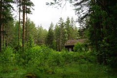 Old house in the forest. Old cotters place in the forest with bushes taking over the fields Stock Photo