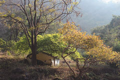 Old house in the forest. Small old white house in the forest of north India, Rishikesh Royalty Free Stock Images