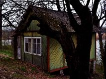 Old house in the old forest in the spring royalty free stock photography