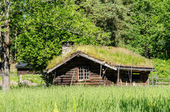 Old house with grass growing on roof Royalty Free Stock Photo
