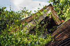 Old house with green ivy Royalty Free Stock Images