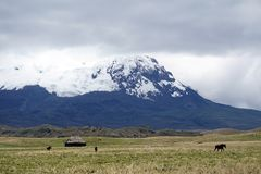Old house and horses below a glacier capped volcano in the Antisana Ecological Reserve, Ecaudor Stock Images