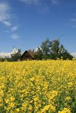 Old House In Canola Field Royalty Free Stock Photo