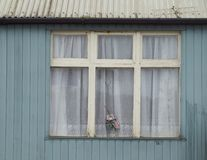 Old house in Ireland. A flower in the window is the only sign of life in this old shabby house in rural Ireland Royalty Free Stock Photos
