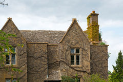 Old house with ivy branches Stock Image