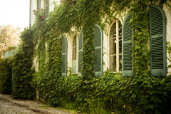 Old house with ivy on the wall Royalty Free Stock Photography