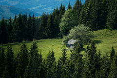 Old house at mountains fields. Forrest around the house. Soft light falling Stock Photo